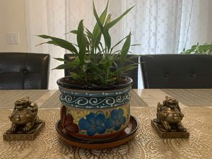 8 Lucky baby bamboo indoor plant with a beautiful vase for Sale in Henderson, NV