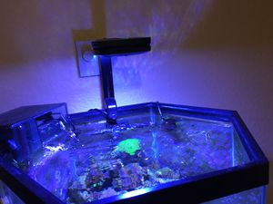 Corals, salt water tank , ai prime lights for Sale in Seattle, WA