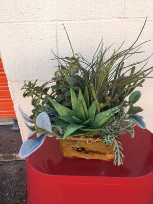 Bountiful and varied potted succulent decor for Sale in Virginia Beach, VA