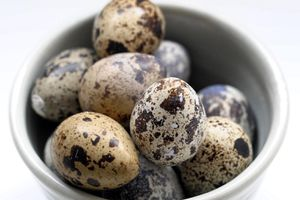 Quails eggs for Sale in PA, US