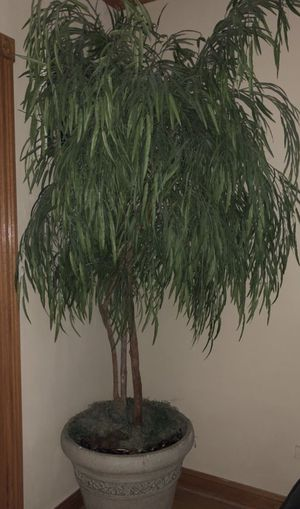 6 foot house plant fake for Sale in Elmwood Park, IL