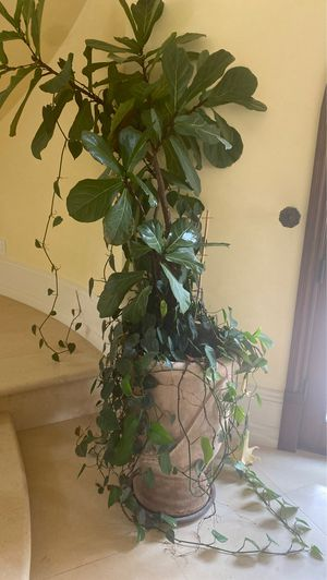 Large pot with plant for Sale in San Juan Capistrano, CA
