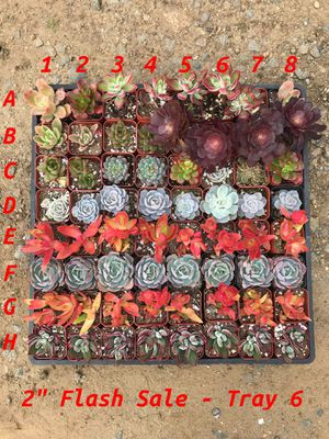 "Succulents 2""$2 for Sale in Oceanside, CA"