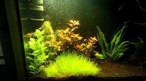 Aquarium planted tank for Sale in Nashua, NH
