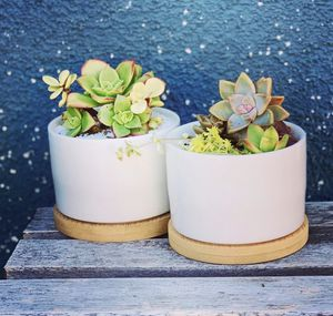Pair of planters with succulents for Sale in San Diego, CA