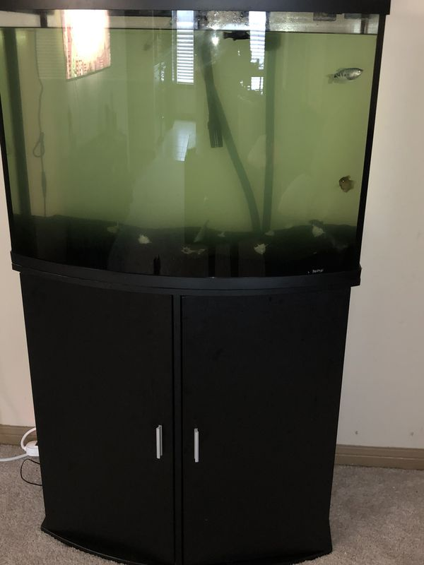 40 gallon aquarium with stand and a fluval canister filter.