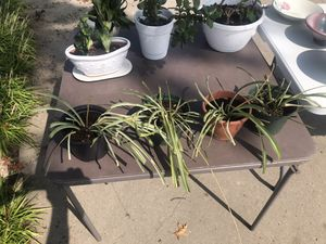 Various house plants for Sale in Jefferson City, MO