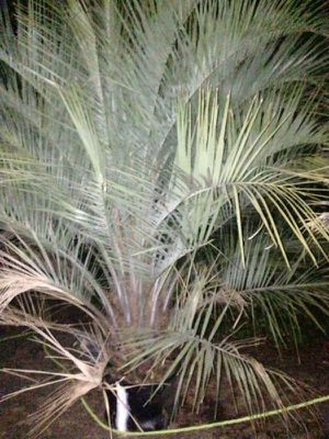 Palms large for Sale in Sebring, FL