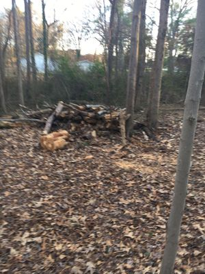 Free wood. for Sale in Archdale, NC