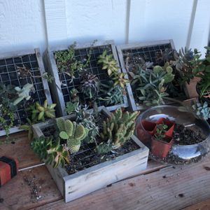 Assorted Succulent Box for Sale in Rancho Palos Verdes, CA