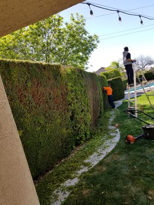 Trim trees clean Up weeds control irrigation for Sale in Phoenix, AZ