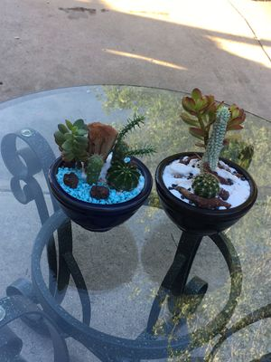 Two small centerpiece with Cactus and jade plant $12 each or $20 for both for Sale in Fontana, CA