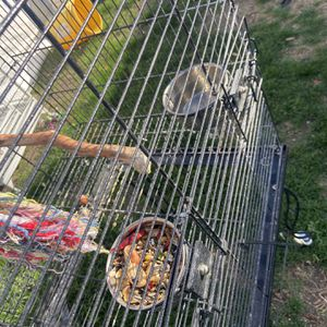 Bird Parrot Cage for Sale in Santa Ana, CA