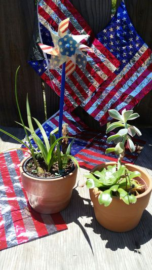 4th of July Succulent Plants for Sale in Fresno, CA