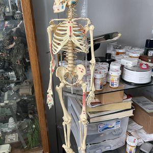 Medical Human Body for Sale in Glendale, AZ