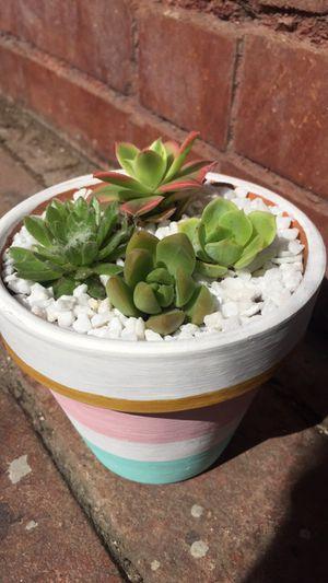 Succulent Arrangement for Sale in Fresno, CA