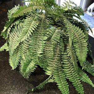 Artificial Fern Plant for Sale in Everett, WA
