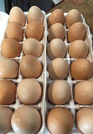 Fresh farm raised eggs $2 dozen. Disputanta Virginia for Sale in Disputanta, VA