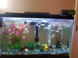 Aquarium. 30 gallons all you need for Sale in Haines City, FL