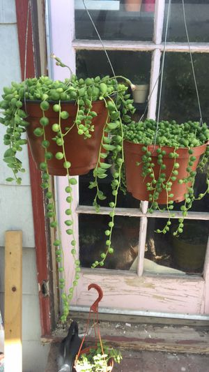 String of Pearls and string of tears for Sale in Fresno, CA