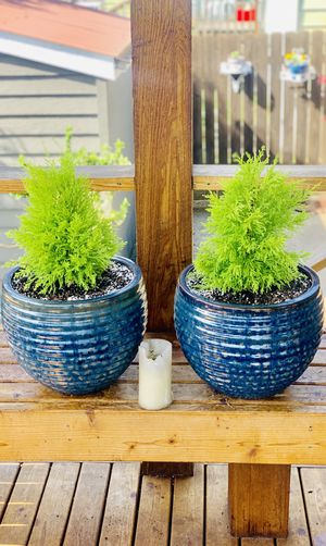 Price is for pair—Live outdoor Lemon Cypress plant trees in a textured ceramic planter flower pot—firm price for Sale in Renton, WA