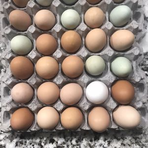 Dozen Eggs for Sale in Vancouver, WA