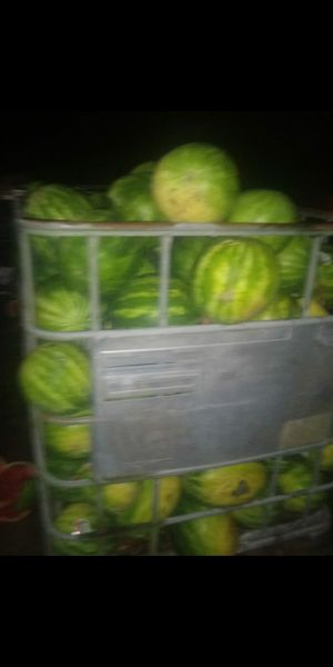 Watermelons for Sale in Lake Wales, FL