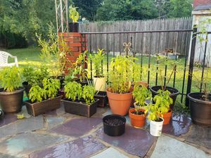 Plants for sell for Sale in Falls Church, VA