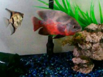 Fish And Tank for Sale in Edwardsville,  IL