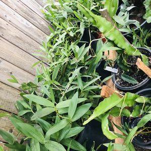 Plants For Sale for Sale in Stockton, CA