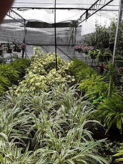 Potted plants for Sale in Haines City,  FL