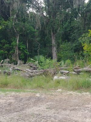 Looking to trade timber for fence wood... for Sale in Brooksville, FL