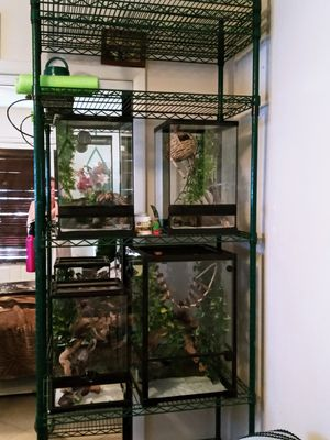 Cage top right for Sale in Las Vegas, NV