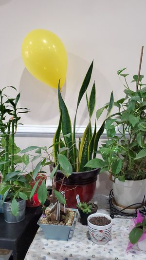 Plants, pots and tables for Sale in Stone Ridge, VA