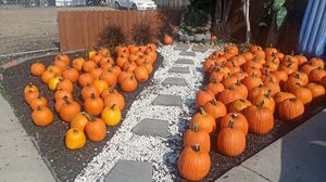 Nice size pumpkins small 2 and large 3 for Sale in Stockton, CA