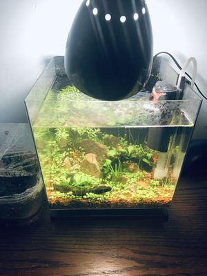 3 gallons planted tank for Sale in Sterling, VA