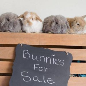 Bunnies Still Available for Sale in Richmond, VA