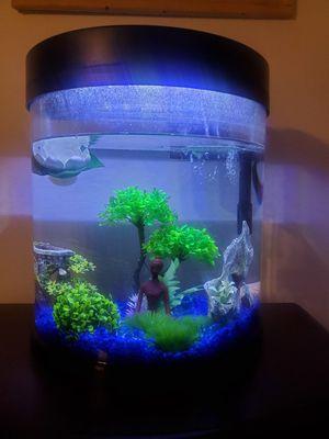 Fish tank aquarium for Sale in Houston, TX