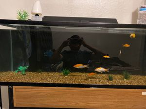 60 gallon fish tank for Sale in Fresno, CA