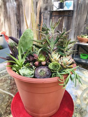 Live Succulent Arrangement for Sale in Visalia, CA