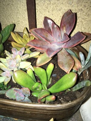 Plants in brass pot for Sale in Norco, CA