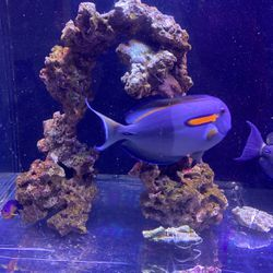 Real Reef Rock - Live and Dry for Sale in Irvine,  CA