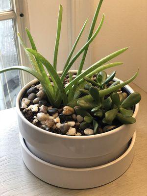 Succulent set for Sale in Reston, VA