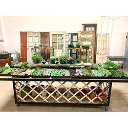 Succulent Sale for Sale in Martinez,  CA