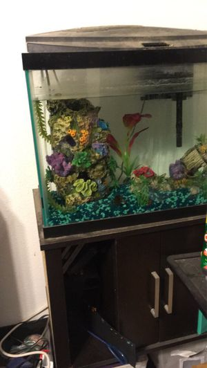 20 gallon fish tank with stand and all accessories for Sale in Colfax, IA