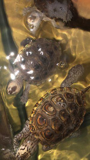 Dbt turtle tank for Sale in Watsonville, CA