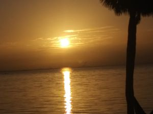 Beautiful picture of sunset driving around Florida 9 1920 for Sale in St. Petersburg, FL