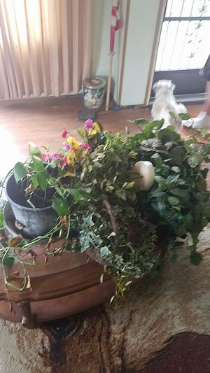 Assortment of fake and real plants for Sale in Oak Grove, OR