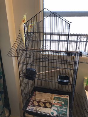 COCKATIELS BIRDCAGE contact for more details for Sale in Culver City, CA