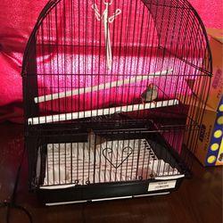 Two Female Zebra Finch Birds for Sale in Oklahoma City,  OK